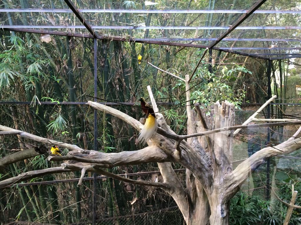 Oiseau du paradis, Bali Marine & Safari Park