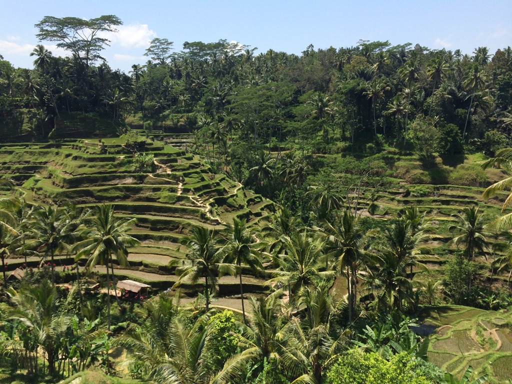 La rizière en terrasse de Tegalalang, Ubud